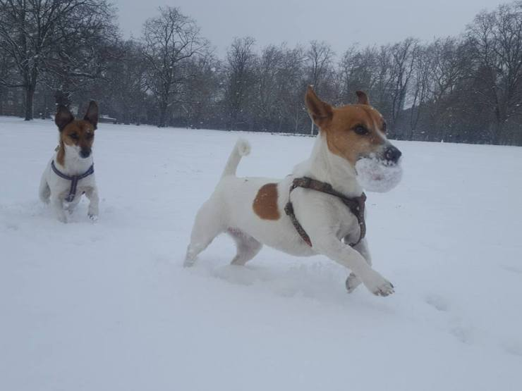 Dolly and Lulu snow